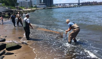 Seining in the East River.