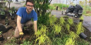 Man planting sedge in the BIP garden beds