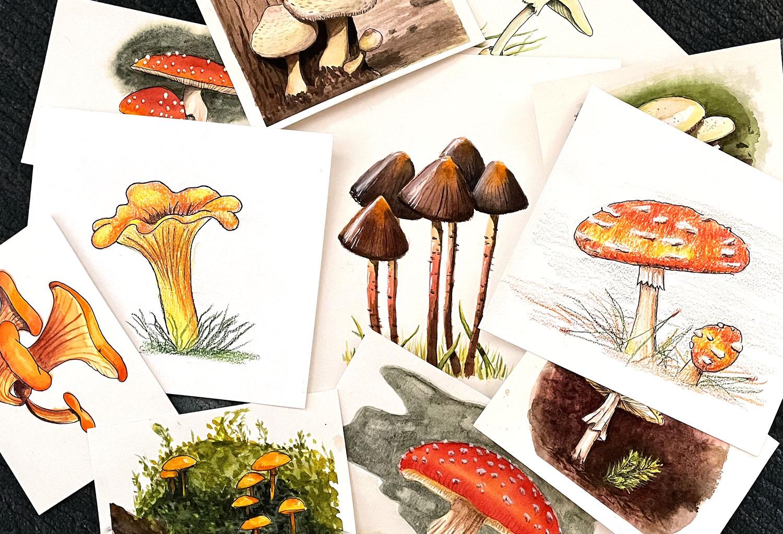 Mushroom illustrations