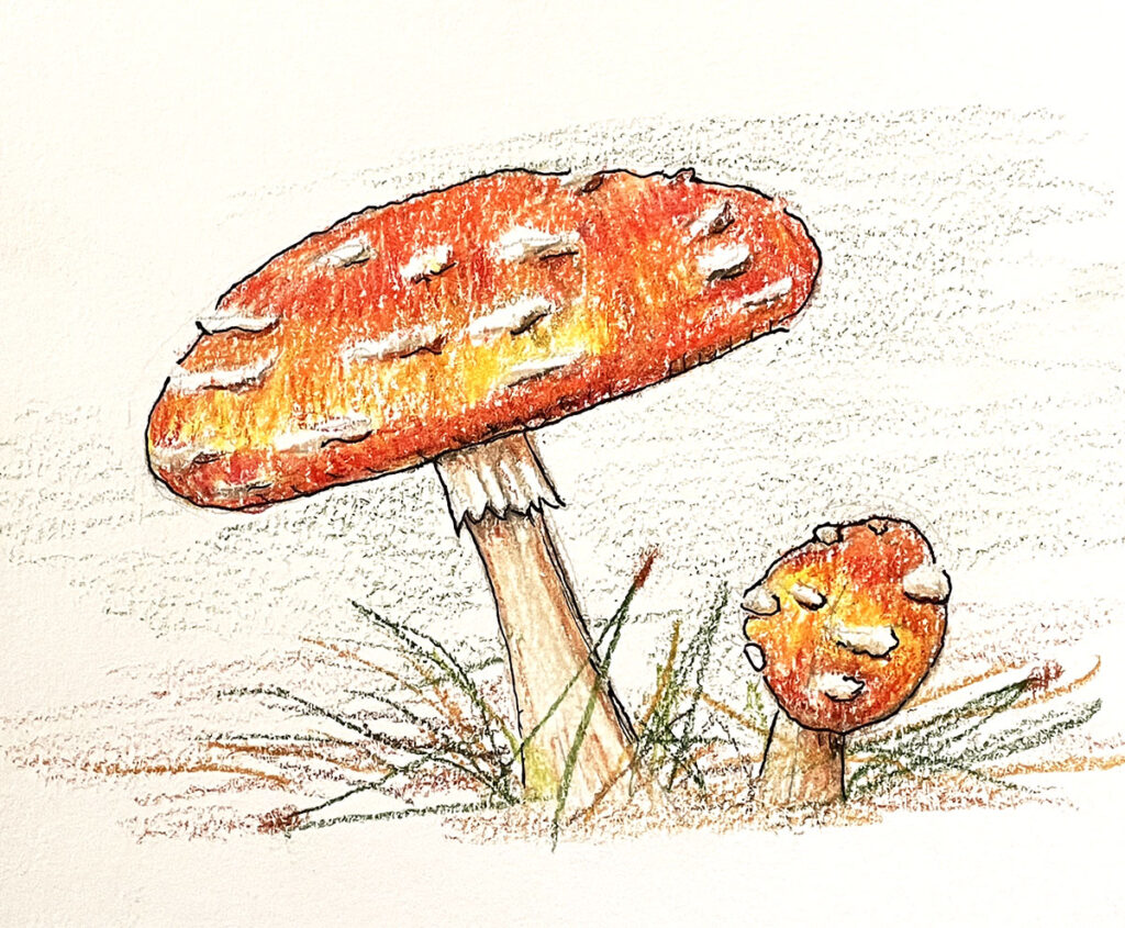 toadstool illustratiion